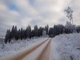 forest, snow, road