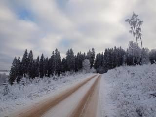 ліс, сніг, дорога
