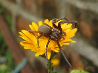 квіти, павук, комаха, крупний план