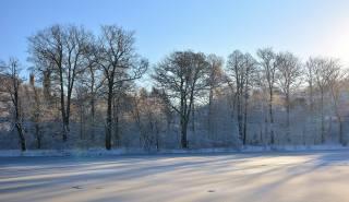 zima, stromy, sníh