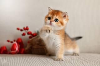 Animal, kitten, cub, pose, branch, berries
