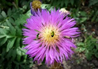 květina, hmyz, léto