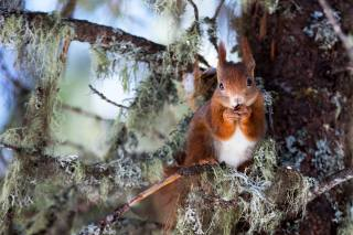 Animal, rodent, animal, Squirrel, nature, tree, branches, moss
