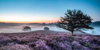 příroda, krajina, kopce, pole, vřes, stromy, mlha, ráno