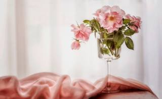 fabric, Glass, flowers, rose