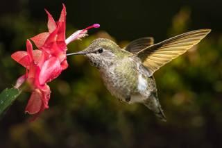 птахи світу, пташка, колібрі, квітка, кактус, макро, боке