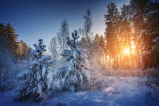 zima, les, slunce, foto, Антон Дятлов
