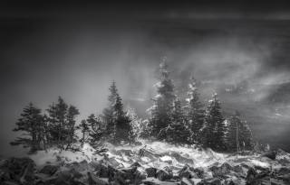 nature, forest, night, snow, Blizzard