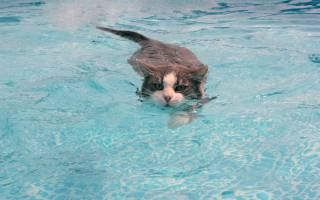voda, kočka, plave