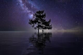ніч, річка, дерево, зірки