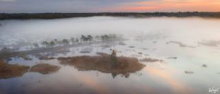 les, bažina, mlha, krásně, fotograf, Илья Гарбузов