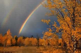 podzim, nebe, duha, bříza, zlato