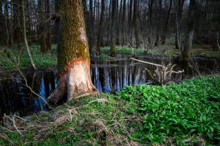 forest, lake, grass, Composition