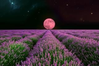 pole, květiny, měsíc, světlo