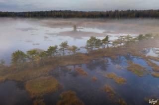 les, bažina, mlha, foto, Илья Гарбузов