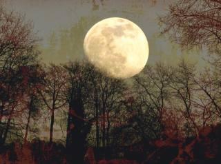 ліс, місяць, повний місяць