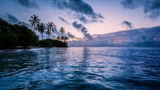 oceán, břeh, palmové, večer, nebe, mraky, příroda