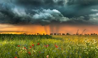 příroda, krajina, léto, pole, bylinky, květiny, bouřka, mraky