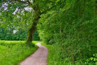 stromy, stezka, léto