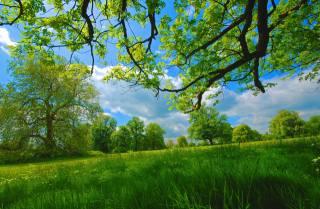 nature, beautiful