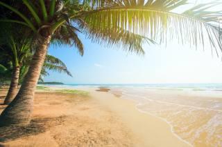pláž, v tropech, oceán, palma