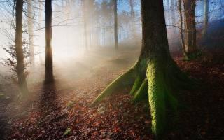 les, sluneční paprsky, stromy, podzim