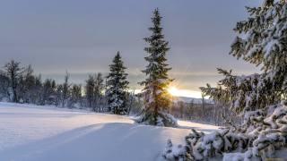 sníh, stromy, závěje, zima