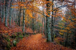 podzim, les, stromy, silnice
