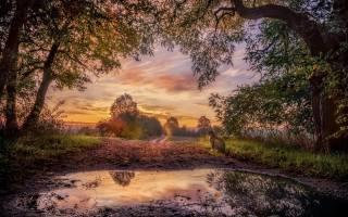 природа, пейзаж, осень, деревья, дорога, лужа, Животное, кот, кошка, закат