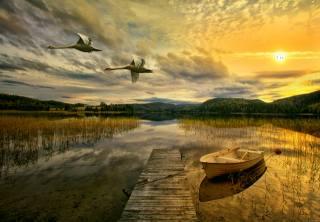 krajina, labutě, večer