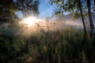 léto, slunce, paprsky, stromy, krajina, větvičky, příroda, svítání, ráno, bylinky, Андрей Чиж