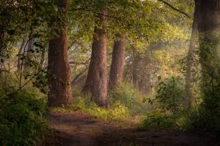лес, лето, деревья, пейзаж, природа, тропинка, Андрей Чиж