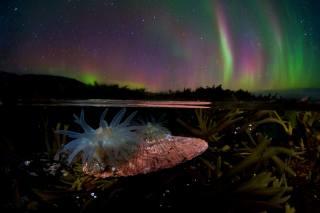 Никифоров Егор, sea, water, algae, литораль, actinium, Anemone, night, Northern lights, the sky, stars