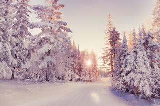zima, sníh, příroda, večer