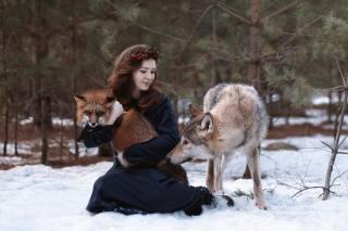 Fox, wolf, animals