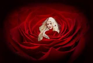 blond, růže, šarlatové, фотоманипуляция
