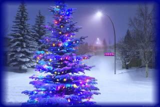 večer, sníh, vánoční strom, osvětlení