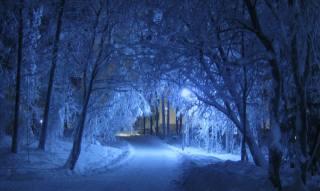 Park, track, lights, night, winter