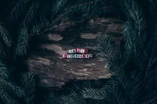 spruce, pine, wood, Hello December
