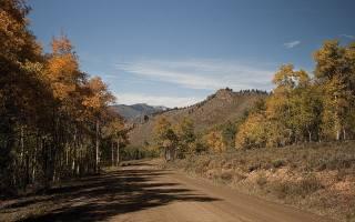 mountains, road, birch