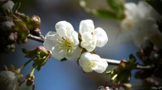 barva, krásně, jaro