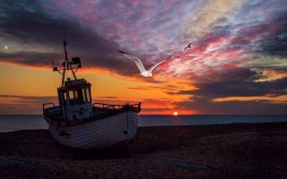 shore, the boat, birds, the sky, dawn, sunset