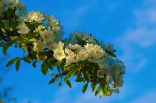 květiny, nebe, jaro, listy, větvička