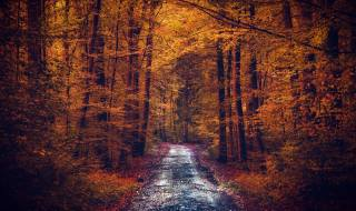 les, cesta, listy