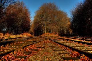 залізниця, ліс, осінь