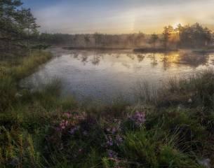 краєвид, на болоте, фото, Павел Ващенков