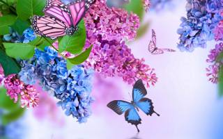 бабочки, летают, около, веток, сирени