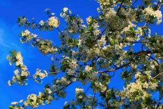 jaro, nebe, listy, květiny, větvičky