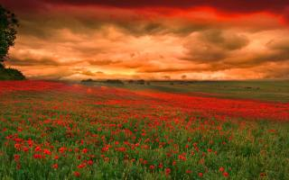 поле, маки, вечір, небо