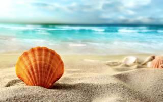 sand, shell, the beach, shells, blur, sea